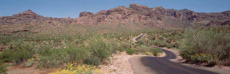 usa-arizona-dreamy-draw-park-cactus-panoramic-images